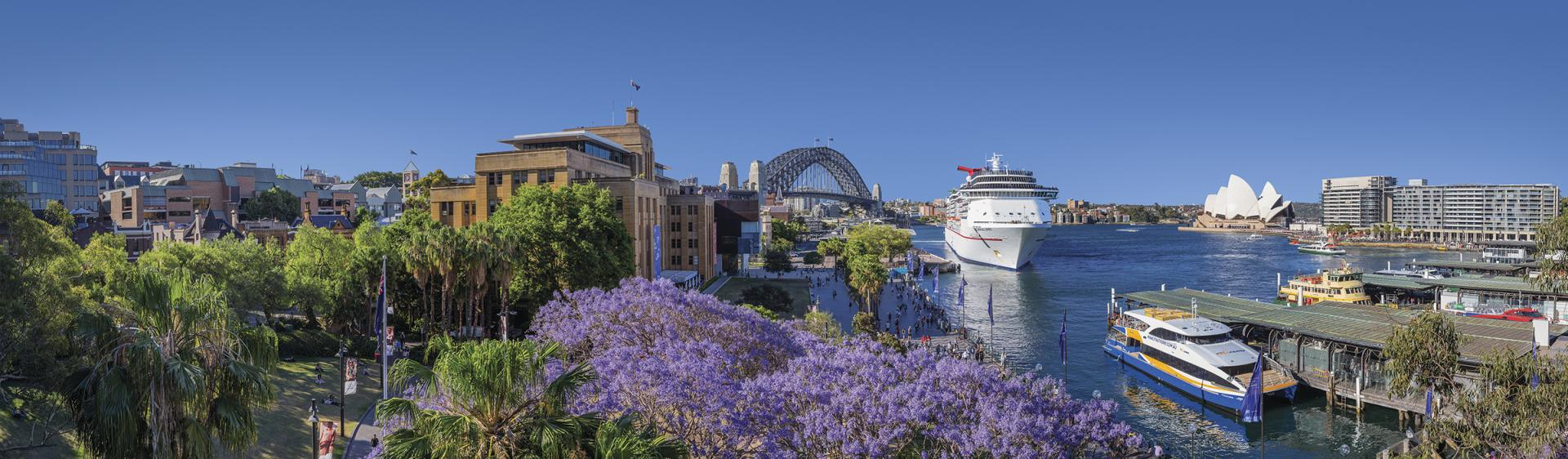Panorama view of vibrant Jacaranda trees in spring bloom at Circular Quay with views to Sydney harbour